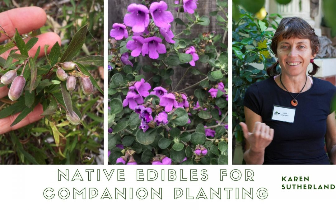 Native Edibles for Companion Planting at BAAG