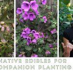 Native edible companion plant class