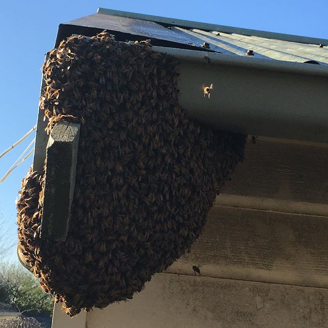 Swarm on the move…