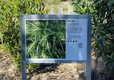 Flax lily, Dianella longifolia corflute sign MBG