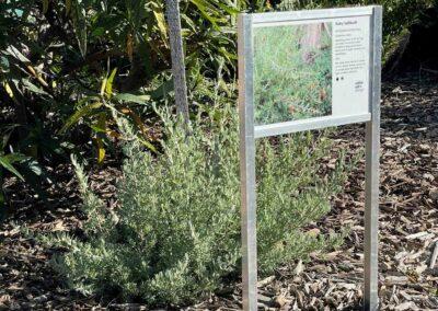 Ruby salt bush sign Melton